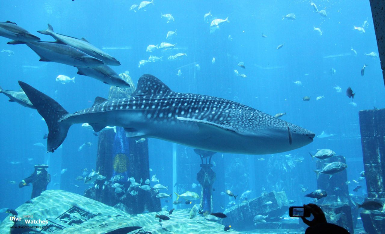 ATLANTIS HOTEL DUBAI AQUARIUM WHALE SHARK - Wroc?awski ...