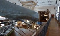 Musee_Oceanographique_Monaco_Impressions_8_2013